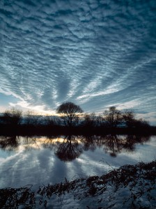 Reflection of Trees & Sky