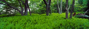 Countryside in North Carolina
