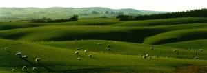 New Zealand Fields