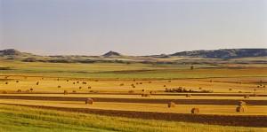 Field in North Dakota