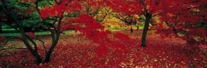 Autumn in Gloucestershire