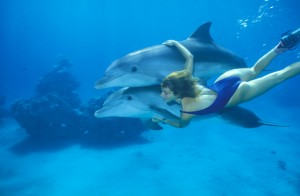 A woman swims with dolphins