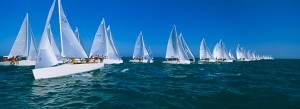 Sailboats Racing in Florida
