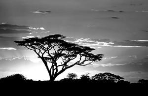 Trees in Tanzania