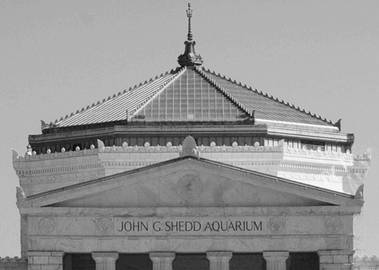 john-g-shedd-aquarium-photograph