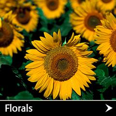 Floral photos