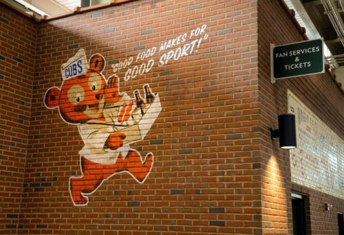 Chicago Cubby Bear Graphic